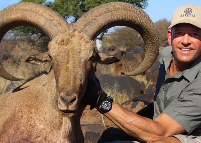 Barbary sheep-za